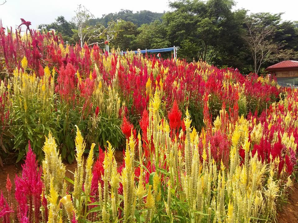 Flower Garden in Cebu