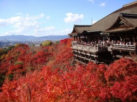 Travel Guide To Japan